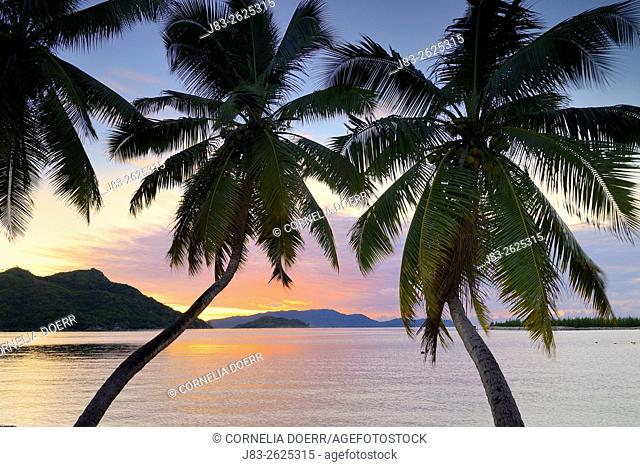 Palm Trees Baie St. Anne sunrise, Praslin Island, Seychelles, Indian Ocean, Africa