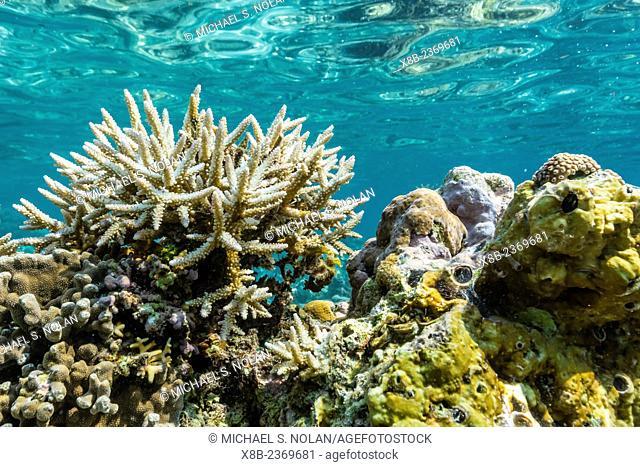 Underwater reef system of the Marine Reserve on Moya Island, Nusa Tenggara province, Indonesia