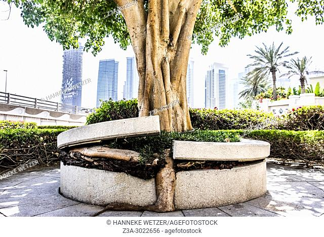 Tree growing out of its surrounding bench in front of supertall skyscraper at Dubai Marina, Dubai, UAE