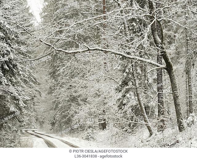 Poland. Bialowieski National Park. Winter