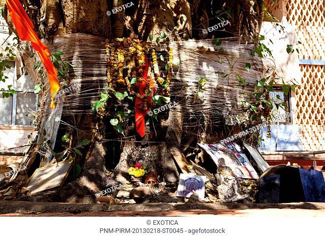 Religious offerings below a tree, Mahalaxmi Temple, Panaji, Goa, India