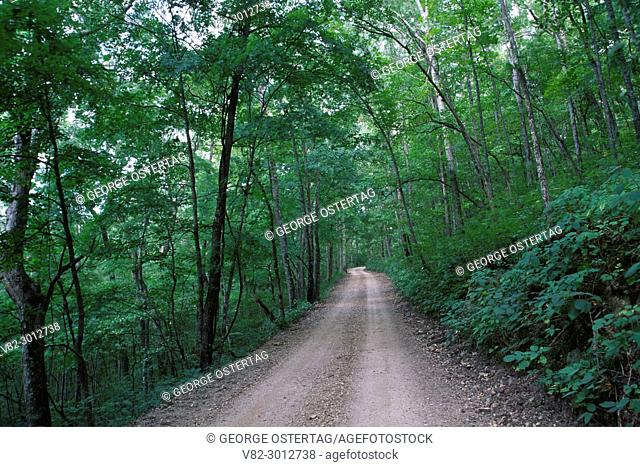 Rymers access road, Ozark National Scenic Riverways, Missouri