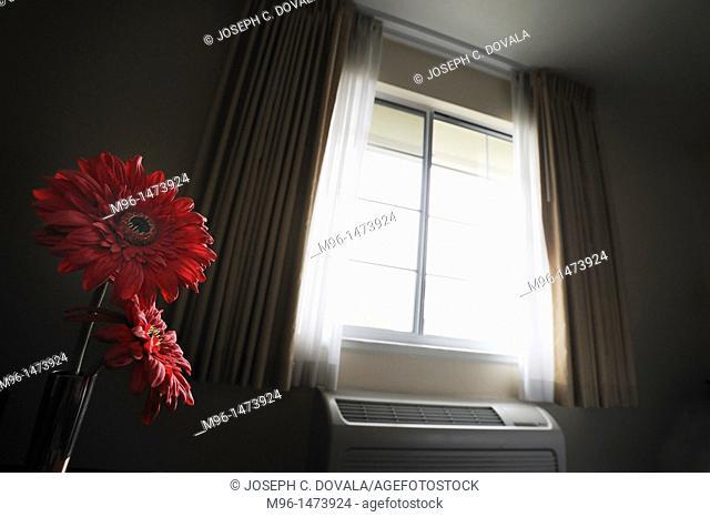 Flowers by motel window light