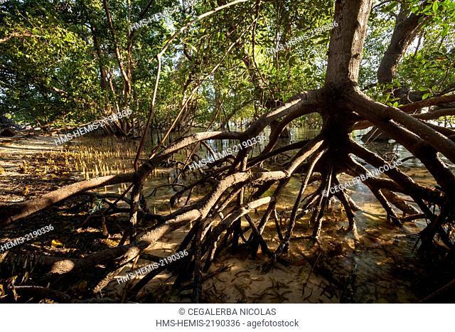 Indonesia, Lesser Sunda Islands, Alor Island, Deere Beach, Mangrove trees