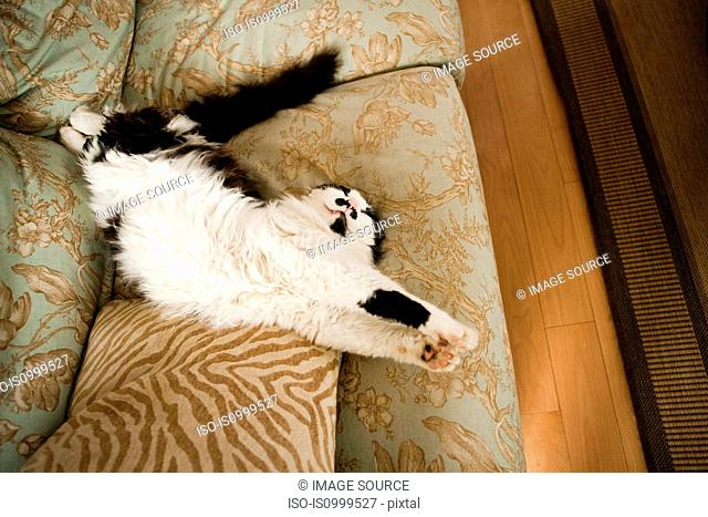 Cat stretching on a sofa