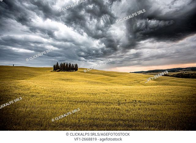 Tuscany, Val d'Orcia, Italy. Cypress trees in a yellow meadow field with clouds gathering
