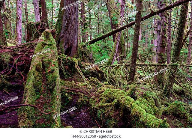 North America, Canada,Canadian, British Columbia, Queen Charlotte Islands, West Coast, Haida Gwaii, Gwaii Haanas National Park Reserve