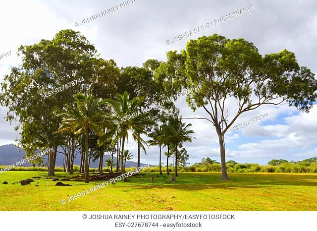 A scenic shot of the historical and tourist attraction the birthing stones in Hawaii along the north shore of Oahu. This grove of trees houses the smooth stones...