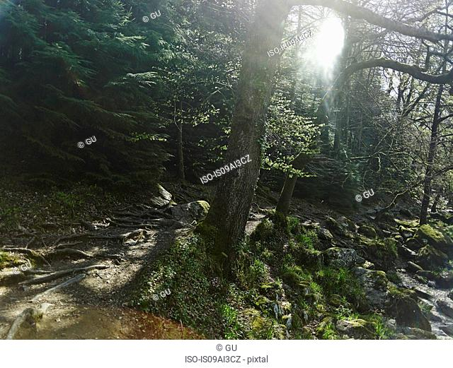 Forest, Betws-y-coed, Snowdonia, Wales