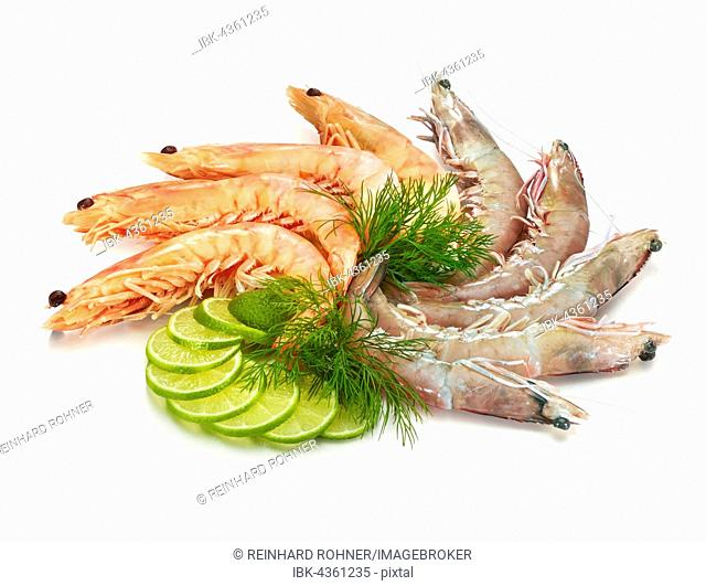 Boiled and raw prawns, lime slices (Citrus aurantifolia) and dill (Anethum graveolens), white background