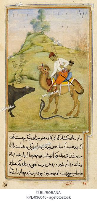 The camel rider the snake and the buffalo. A miniature painting from a seventeenth century manuscript of Anvar-i Suhayli a version of the Kalila va Dimna fables