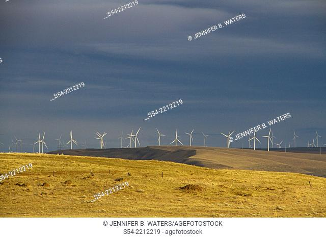 A windmill farm in Washington State near the Columbia River