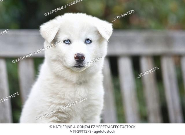 Portrait of white puppy