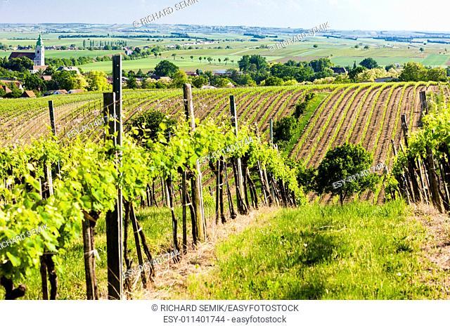 view of vineyard near Unterretzbach, Lower Austria, Austria