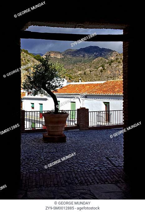 Olive Tree, Frigiliana Village roof and Mountains,