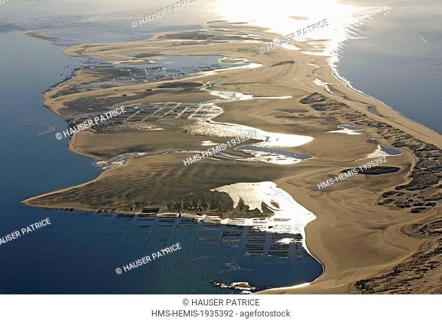 France, Gironde, Bassin d'Arcachon, Banc d'Arguin, oyster park (aerial view)