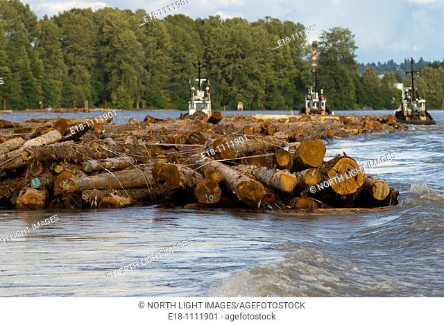 Canada, BC, Vancouver.  Tug boats towing log booms up the river to saw mill on the lower Fraser River