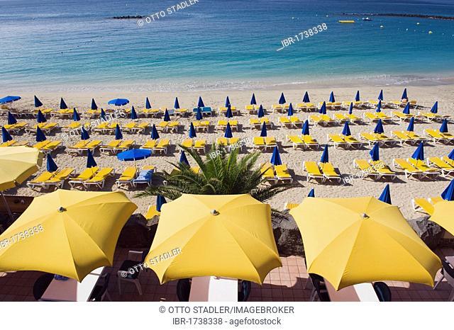 Yellow sun umbrellas on a sandy beach, Playa Dorada, Playa Blanca, Lanzarote, Canary Islands, Spain, Europe