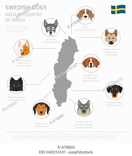 Dogs by country of origin. Swedish dog breeds. Infographic template. Vector illustration