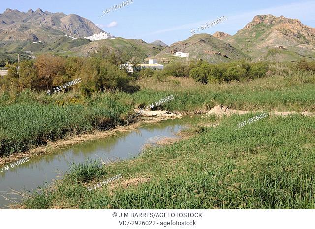 Aguas River mouth surrounded of reed (Phragmites australis) and tamarisk (Tamarix). Mojacar, Almeria province, Andalucia, Spain