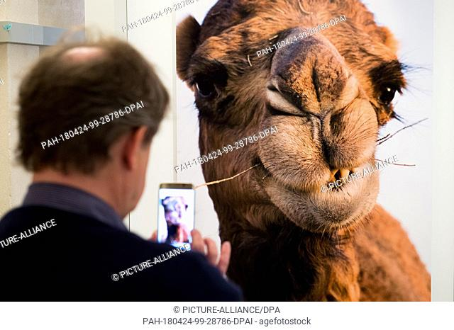 24 April 2018, Germany, Berlin: A visitor takes a picture of an exhibited photo with a camel on it taken by photographer Herlinde Koelbl at the exhibition...
