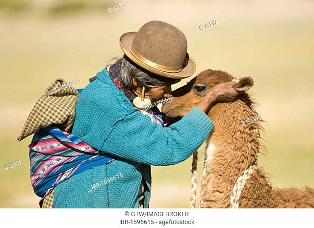 Bolivian woman training a young llama (Lama glama), San Juan, Potosi, Bolivia, South America