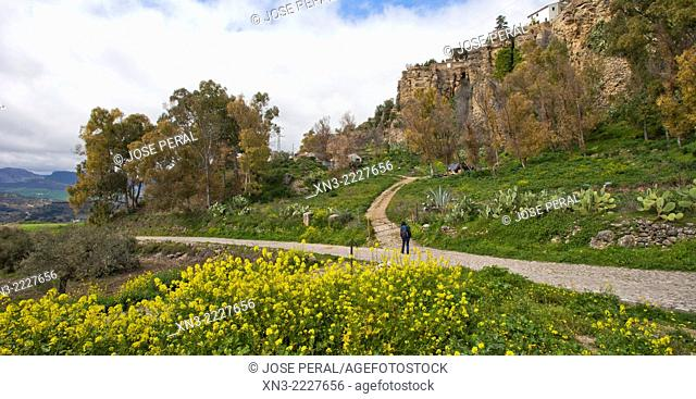 Road near the Carretera de los Molinos to ''El Tajo'' canyon or gorge, Ronda, White Towns, Malaga province, Andalusia, Spain, Europe
