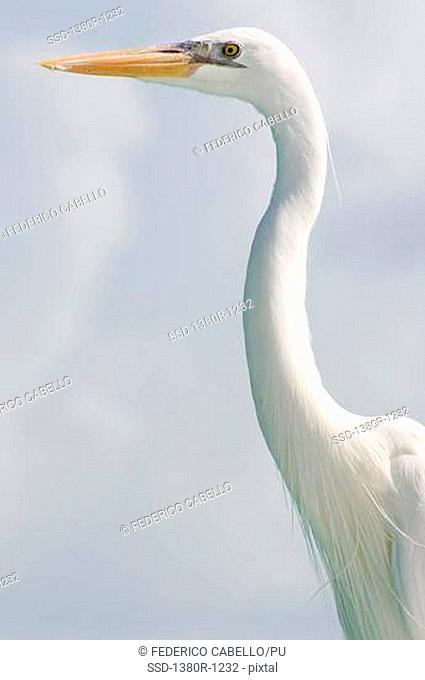 Low angle view of a Heron, Los Roques National Park, Los Roques, Venezuela
