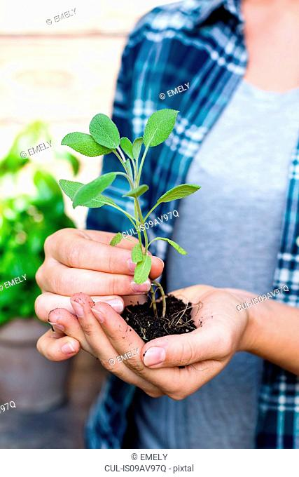 Woman holding seedling, close up