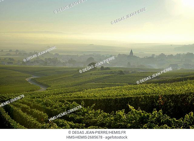 France, Marne, Sacy, mountain of Reims, vineyards of Champagne wih a village in the background in the mist