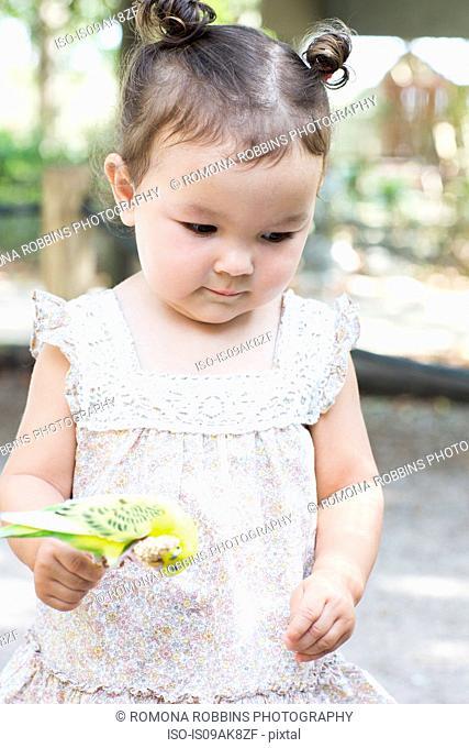 Baby girl holding budgerigar parakeet at zoo