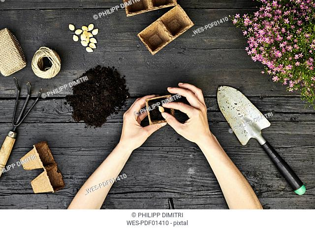 Woman's hands planting