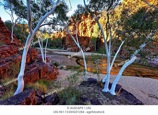 Trephina Gorge with Ghost gums, Corymbia aparrerinja). Trephina Gorge Nature Park, East McDonnell Ranges, Northern Territory, Australia