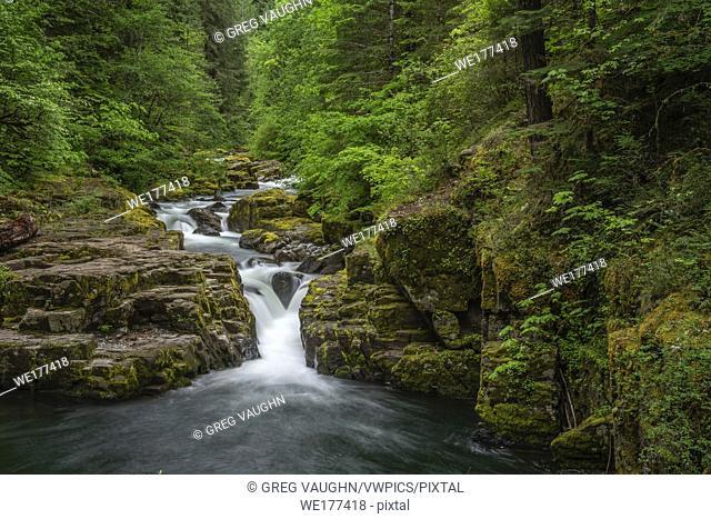 Brice Creek Falls, Umpqua National Forest, Oregon