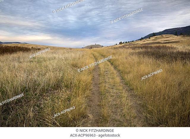 Faint double track road to the horizon in grassland, Kalamalka Lake Provincial Park, British Columbia, Canada