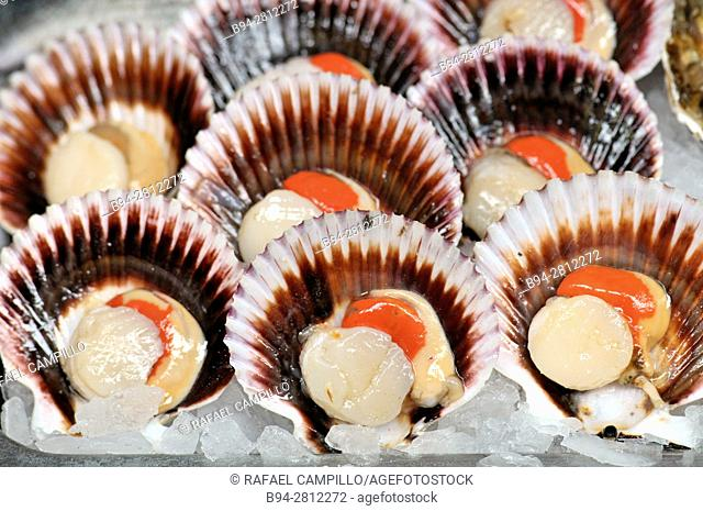 Sea food. Pectinidae (Pectinidae), commonly known as scallops, are a family of bivalve molluscs, closely related to clams and oysters