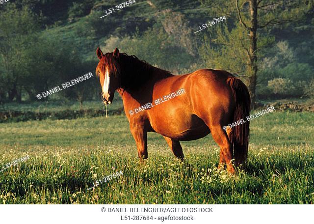 Horse. Valle de San Emiliano natural area. León province, Spain