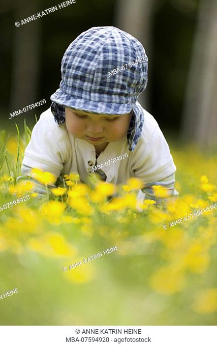 baby crawling through flowers, low perspective, Bonn, Germany
