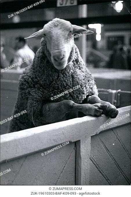 Mar. 03, 1961 - Sheep Plays 'Peeping Tom': Photo shows An Amusing Snapshot of a Sheep taking a look around at the Agricultiral show just opened in Paris