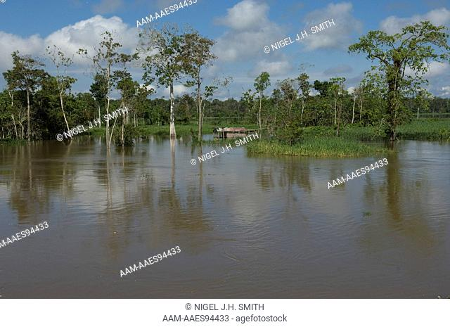 House abandoned during annual flood of the Solimões (Amazon) River, Iranduba, Amazonas, Brazil 6-20-07