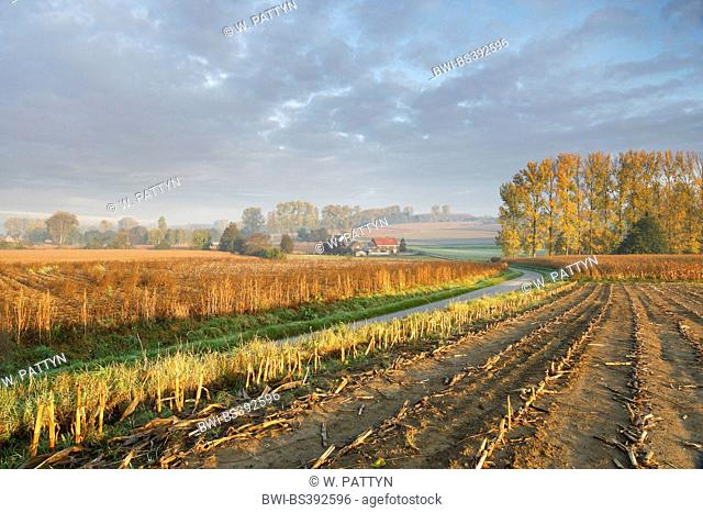 harvested maize field, Belgium, Ardennes