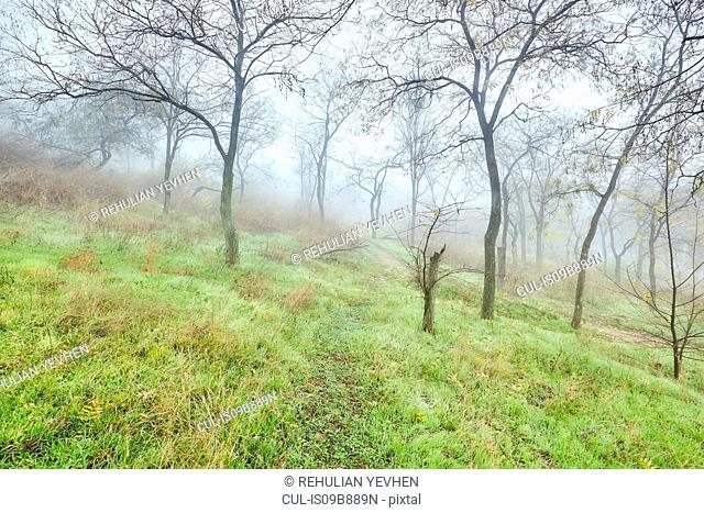Trees on hillside in winter, Odessa, Odessa Oblast, Ukraine, Europe