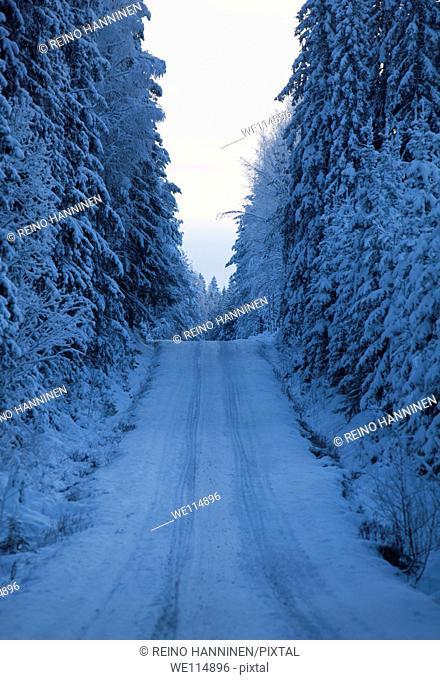Empty logging road at midwinter  Location Suonenjoki Finland Scandinavia Europe