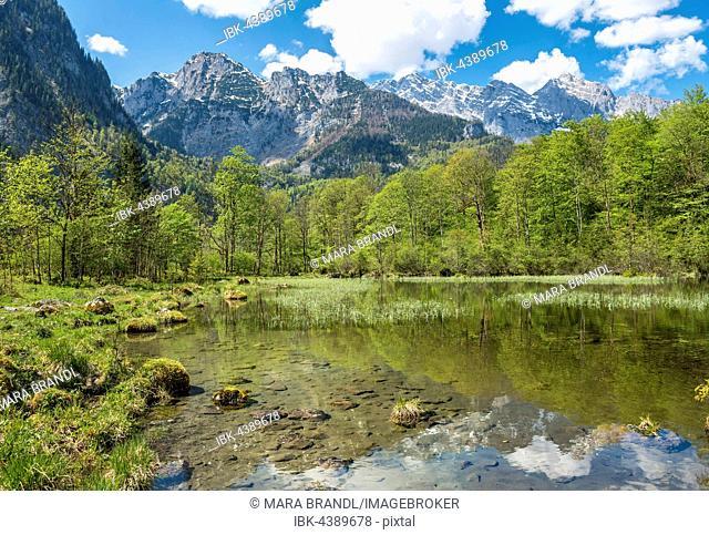 Mittersee, Salet am Königssee, Berchtesgadener Land, Upper Bavaria, Bavaria, Germany
