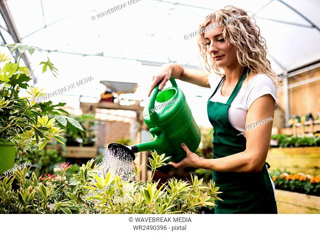 Female florist watering plants with watering can