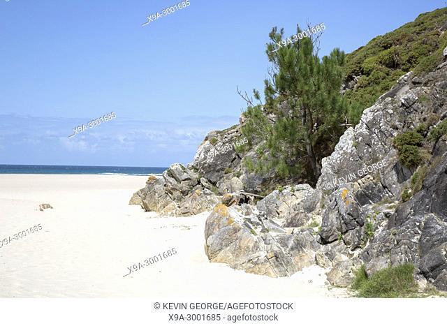 Tree at Rostro Beach; Finisterre; Costa de la Muerte; Galicia; Spain