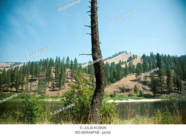 Single bare tree and mountain ranges