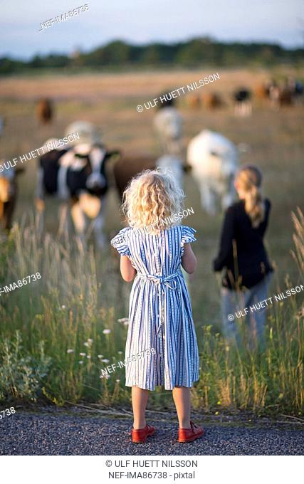 Two girls looking at cows on pasture