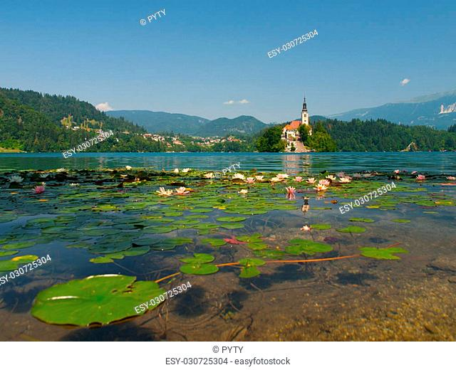 Bled Island with St. Mary's Church of the Assumptionon and Bled Lake with water lilies, Bled, Slovenia