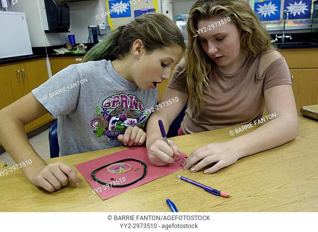 7th Grade Girls Making Model of Mitosis in Science Class, Wellsville, New York, USA